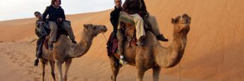 dromedarios-desierto-lompoul