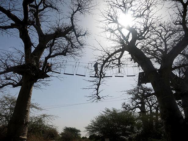 baobab-tirolina-senegal