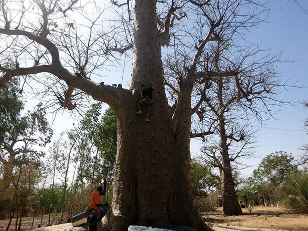 escalada-baobab
