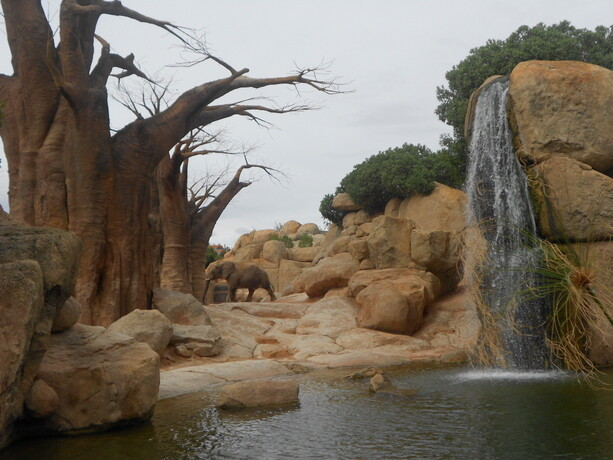 El gran elefante al fondo