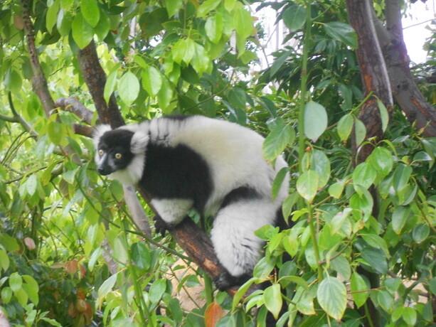Lemures...