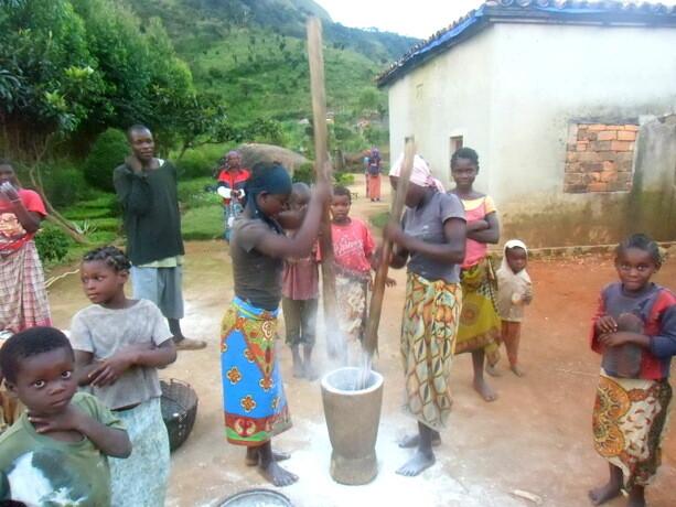 Moliendo cassava para hacer harina