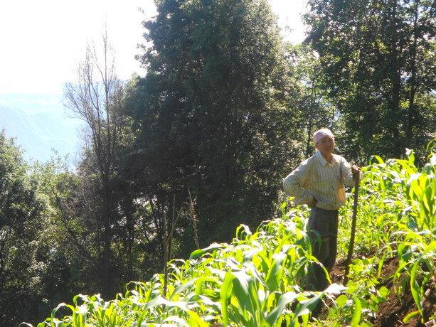 Agricultor trabajando el maíz en las laderas del San Pedro
