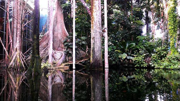 bosque-inundado-cosmocaixa