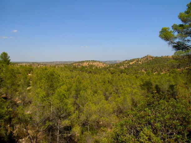 Los pinos carrascos tapizan el Valle del Cabriel