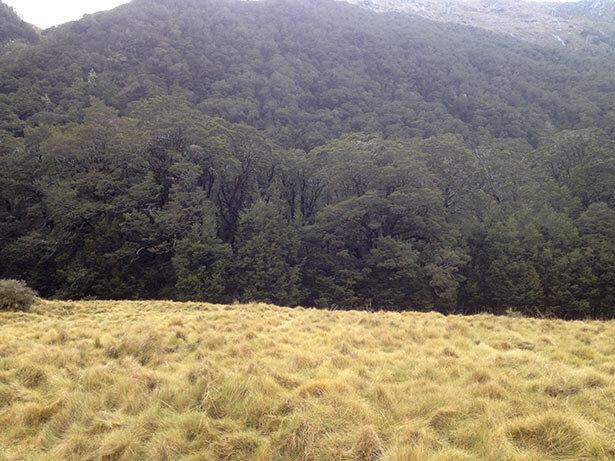 Nueva-Zelanda-Will-7