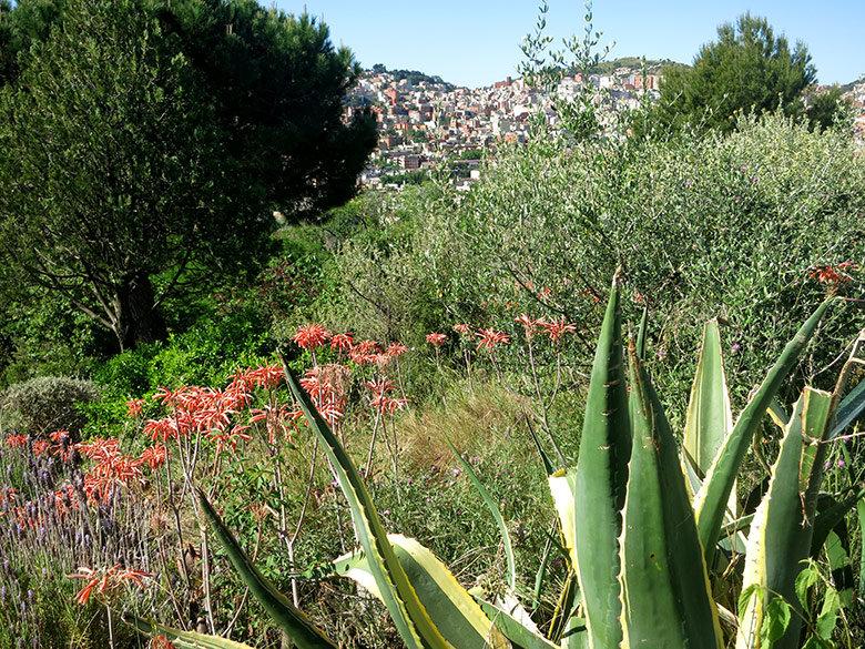Frondosa vegetación en el mirador del parque