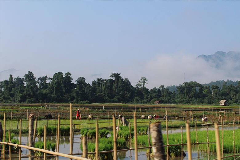 Campos de cultivo en Laos