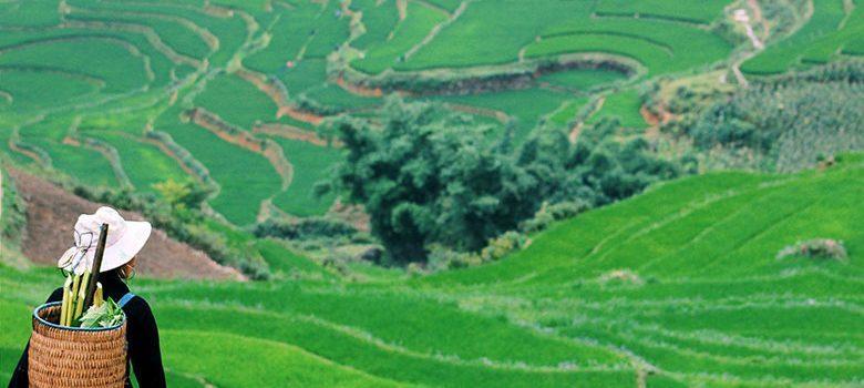 Campos de arroz en Sapa