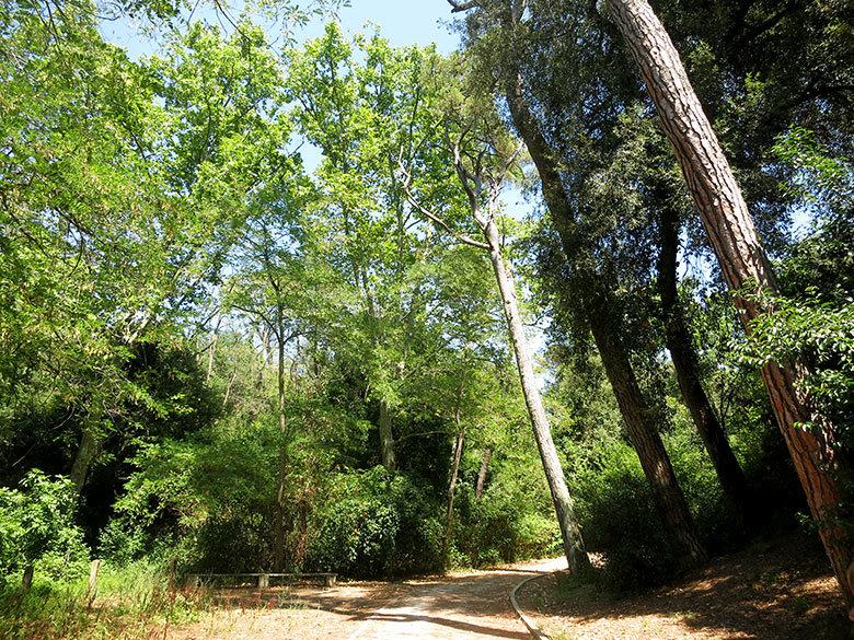 Los frondosos bosques de Collserola