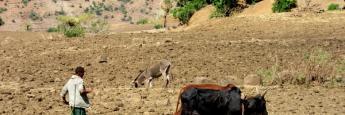 etiopia-campos