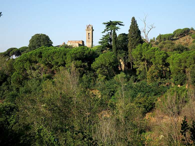 Sant Jeroni de la Murtra emergiendo entre el espeso bosque