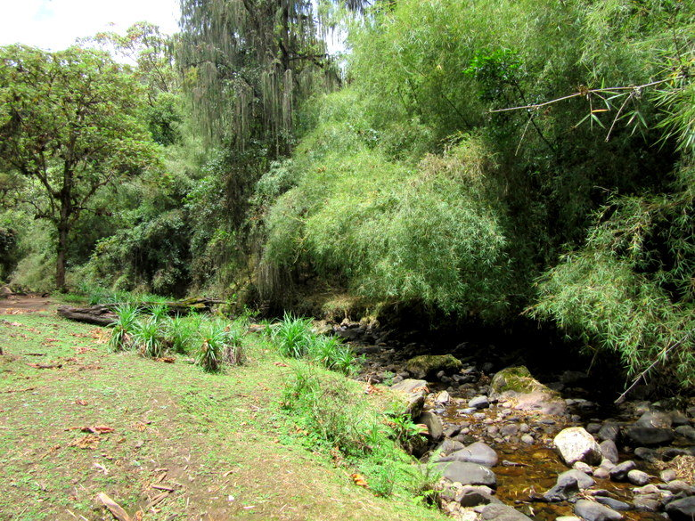 Bosques de Dodola