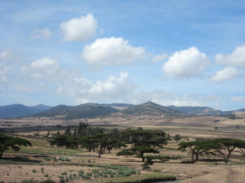 Acacias. Típico paisaje africano entre Shashemene y Dodola