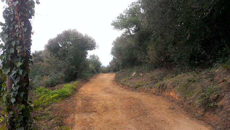 El camino principal que nos llevará entre las poblaciones de Alella y La Conrería