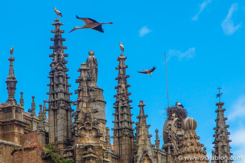 Cigüeñas, Catedral de Plasencia, Plasencia, Extremadura