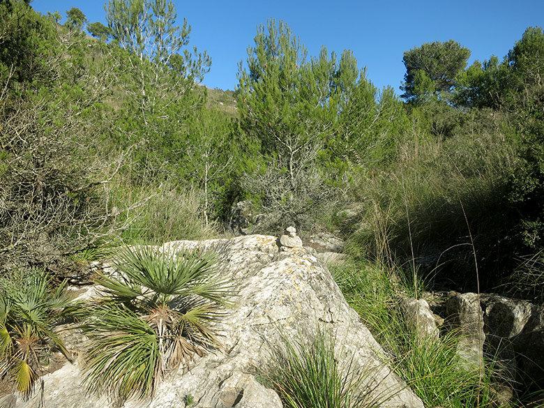 El frondoso y dificultoso sendero antes de llegar a Vallgrassa