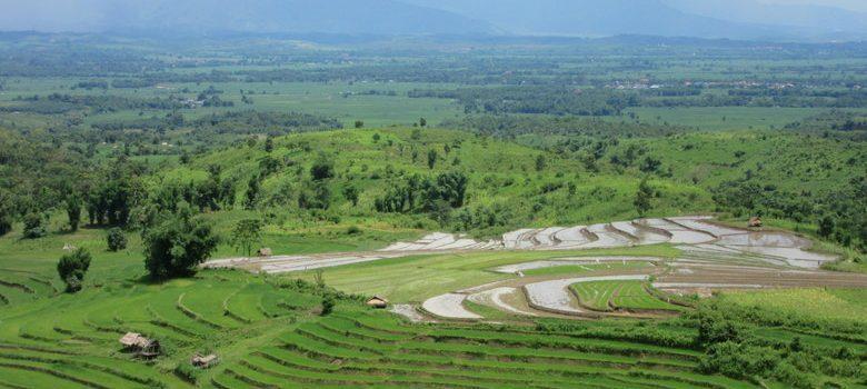 Campos de arroz en Kentung, Myanmar