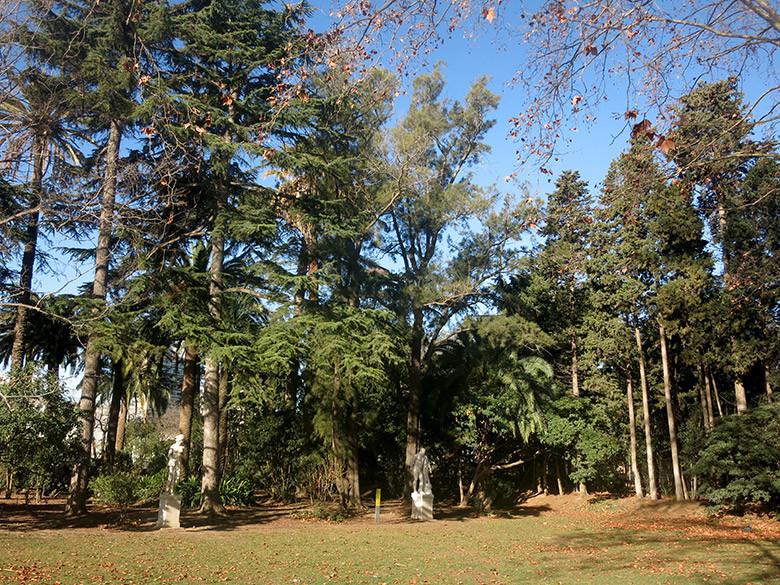Zona de árboles en la parte norte del parque