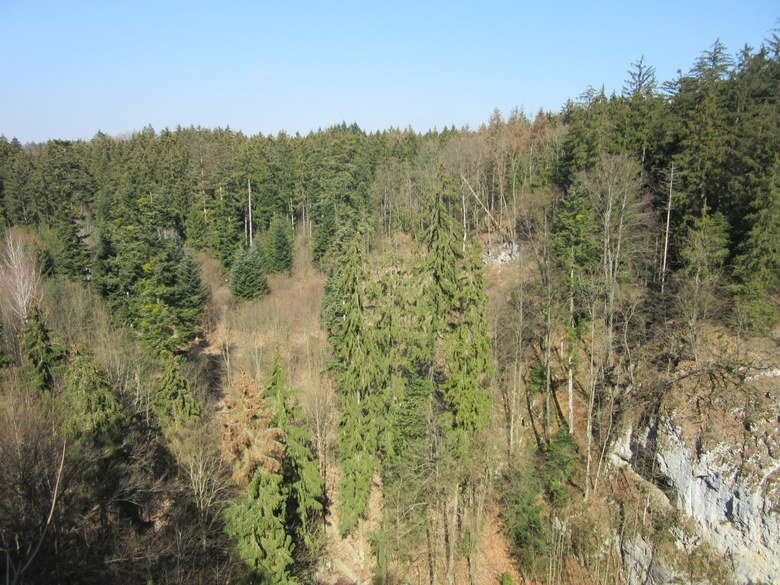 Árboles del Karst de Moravia