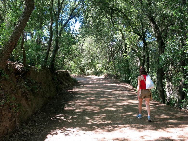 La pista principal que transcurre por el valle de Sant Iscle