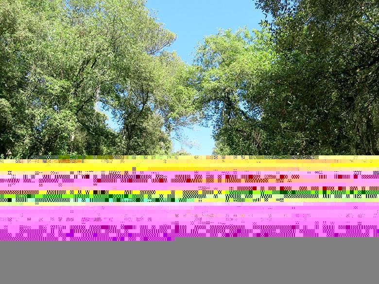 La espesa vegetación que encontramos en la cara norte de Collserola