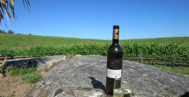 Los viñedos de Pazo de Rubianes