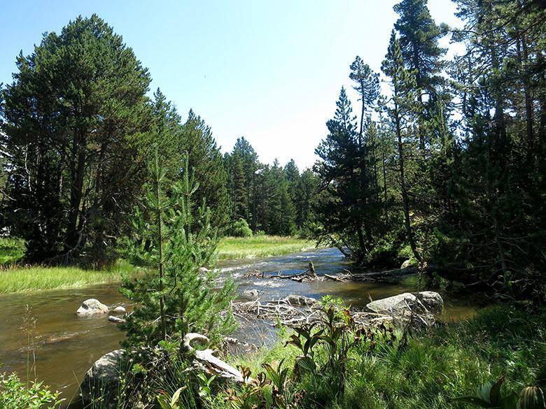 El manso río que cruce el Pla de Barrès en el Pirineo francés