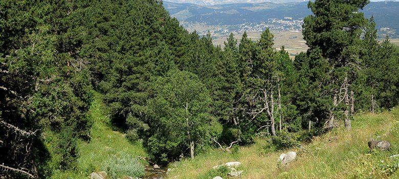 El valle de Eyne con vistas al Pirineo francés