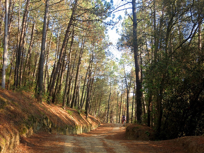Pista recorriendo el bosque de Céllecs