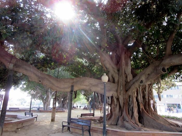 Parque Canalejas de Alicante