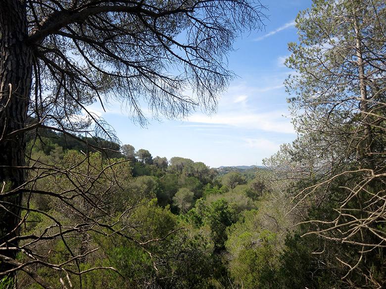 El frondoso bosque de Céllecs