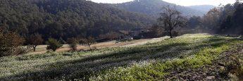 Campos de cultivo en la riera de Sant Medir