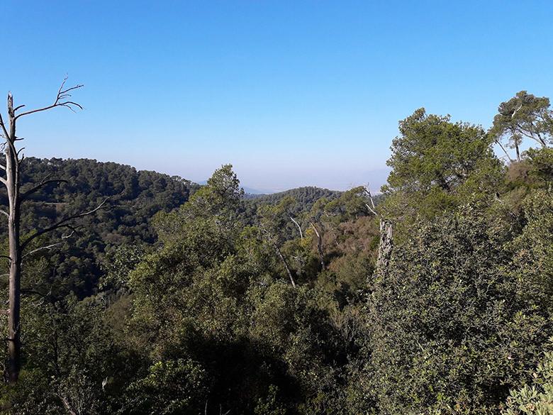 El espeso bosque del interior de Collserola