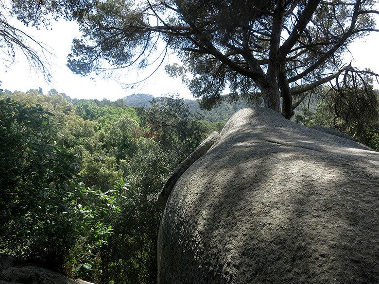 elefant orriols