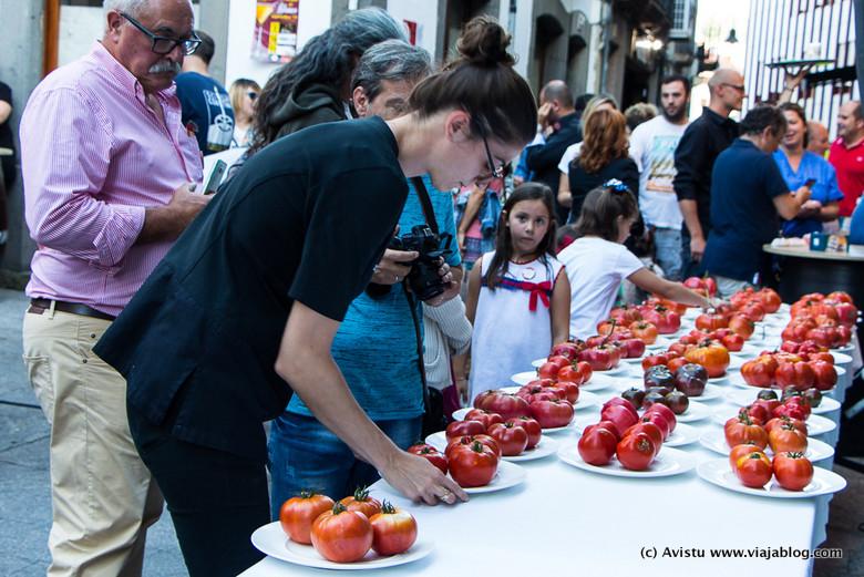 Exposición Tomates participantes Festival del Tomate de Huerta en Cangas del Narcea