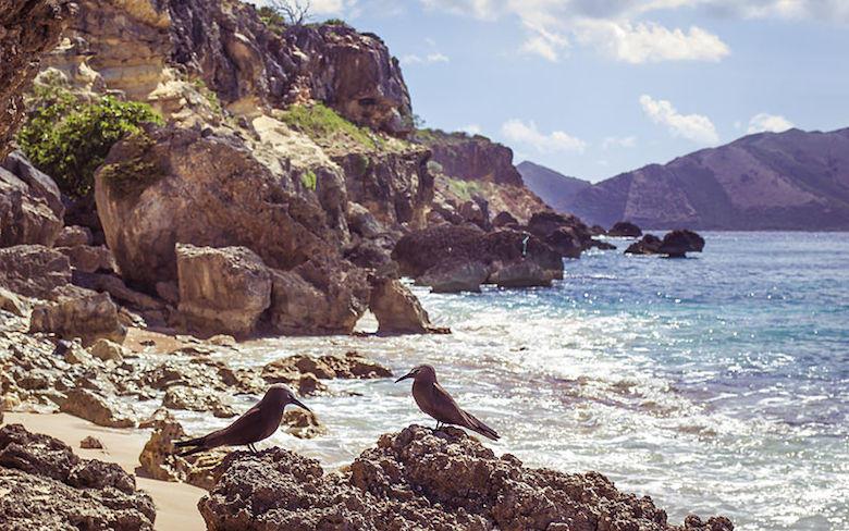 Pájaros en la costa de Isla de San Martín