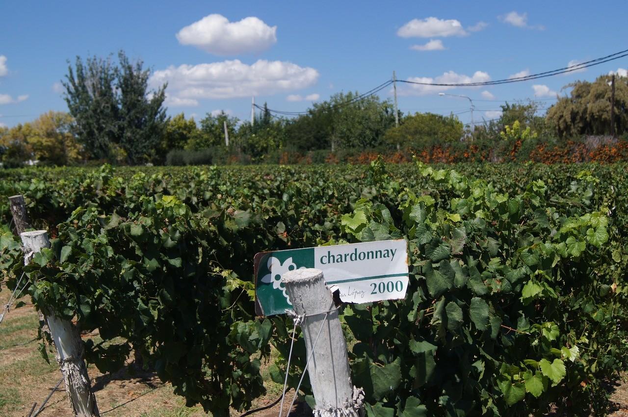 viñedos Mendoza Argentina