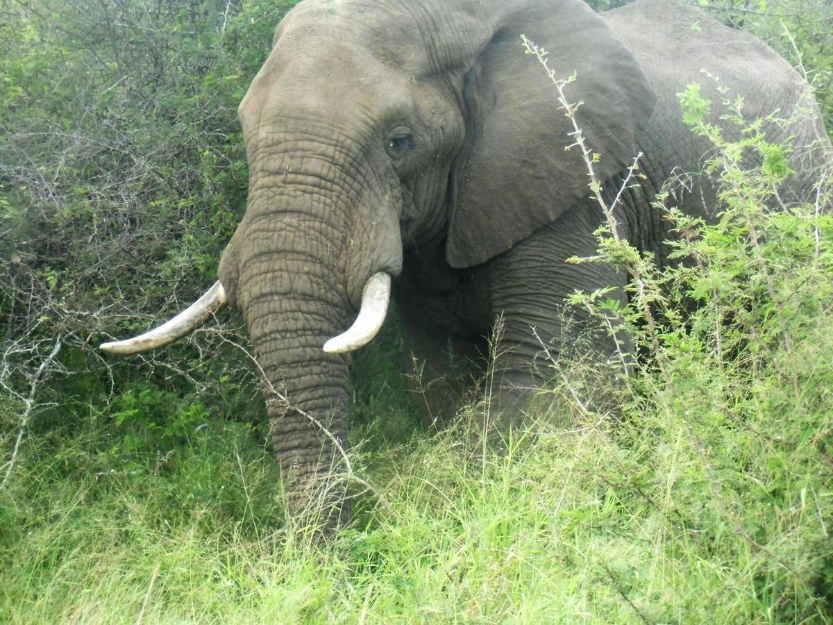 Elefante en el Kruger