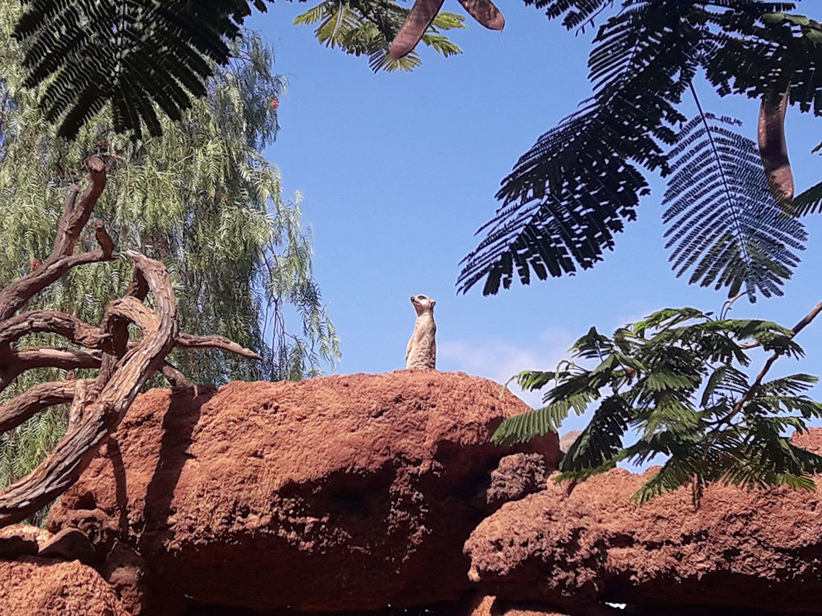 que-ver-fuerteventura-oasis