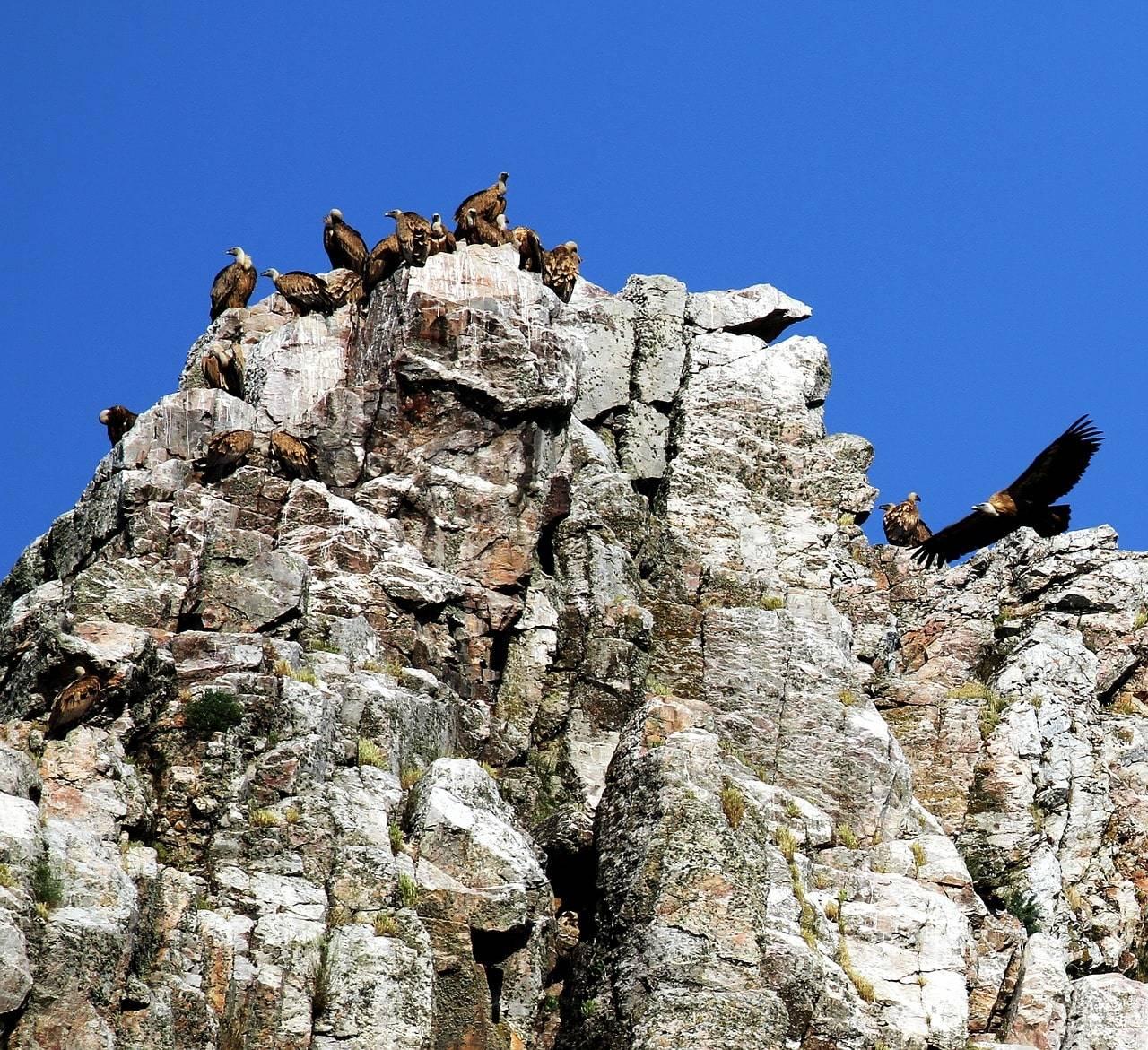 parque nacional monfrague caceres