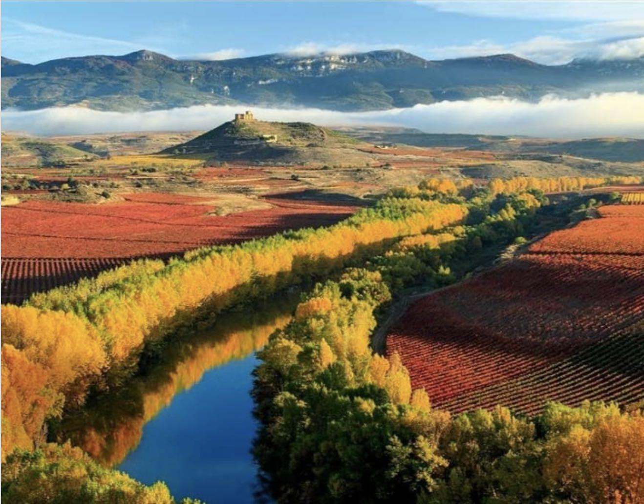 Viñedos en San Asensio en La Rioja
