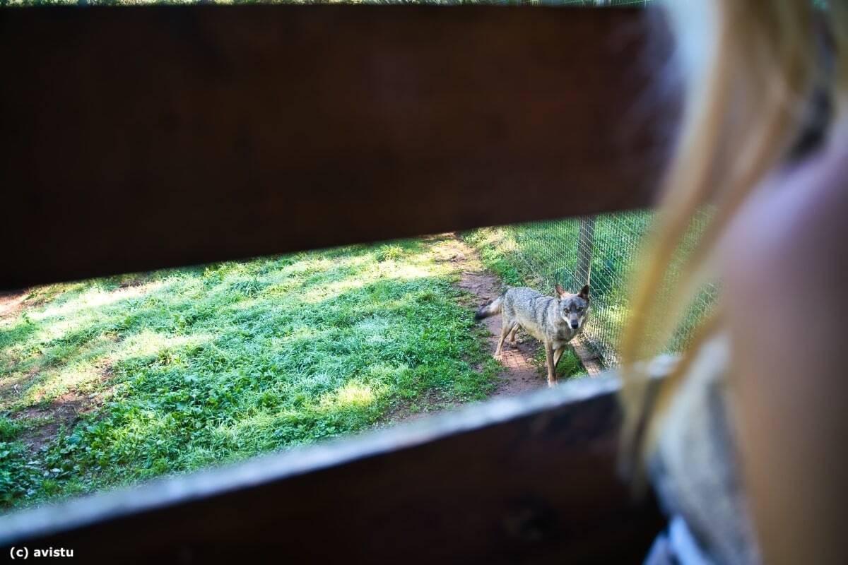 Cercado del Lobo en la Casa del Lobo, Belmonte de Miranda, Asturias