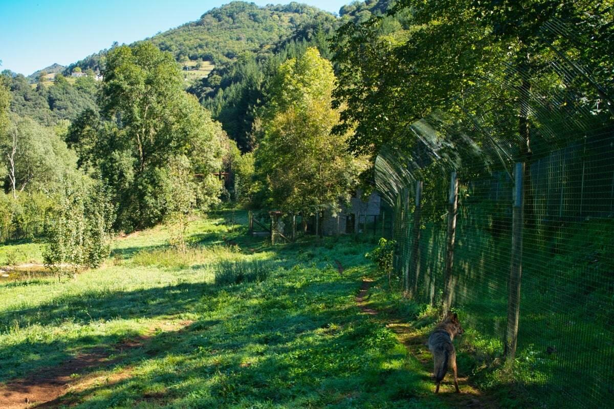 Vista parcial del Cercado del Lobo Belmonte Asturias