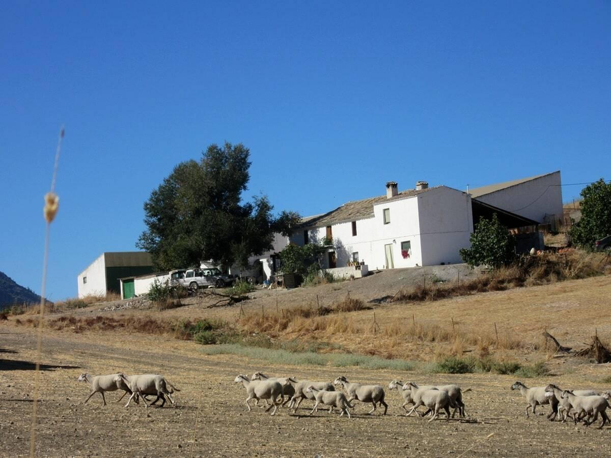 paisaje rural cordoba