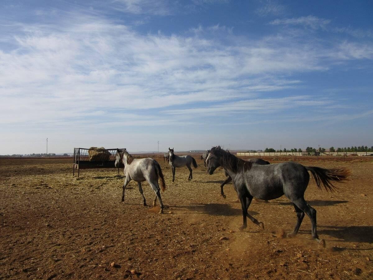 mejores casas rurales de Córdoba