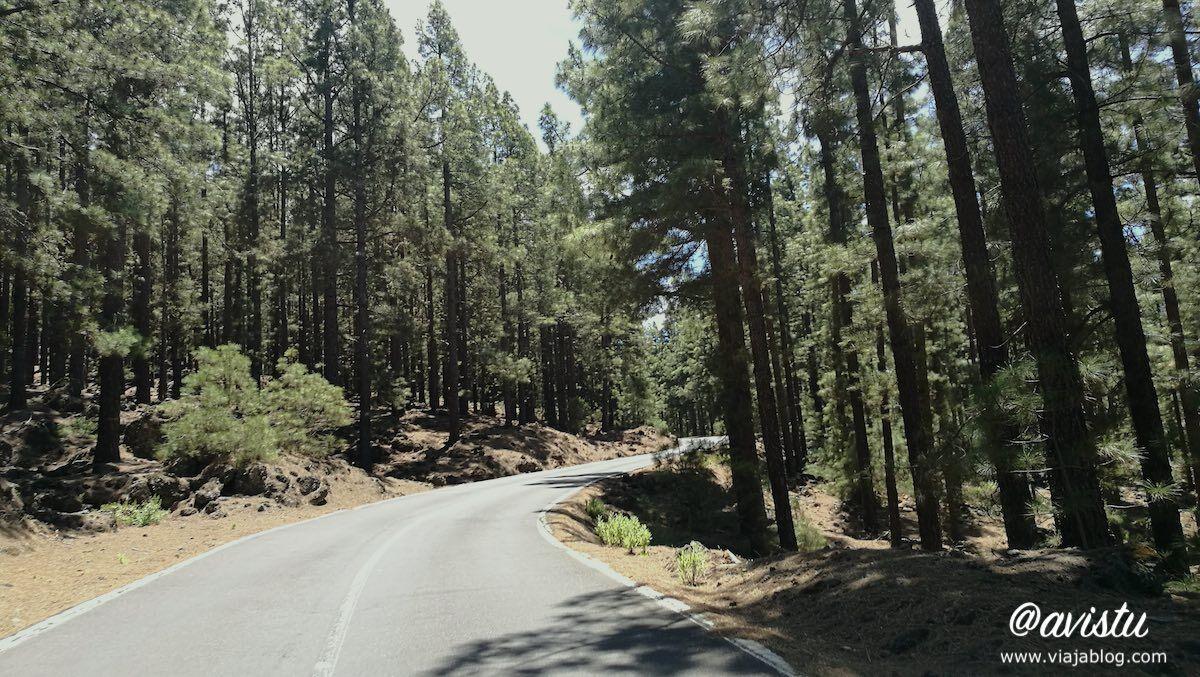Carretera de las Cañadas del Teide, Valle de la Orotava, Tenerife