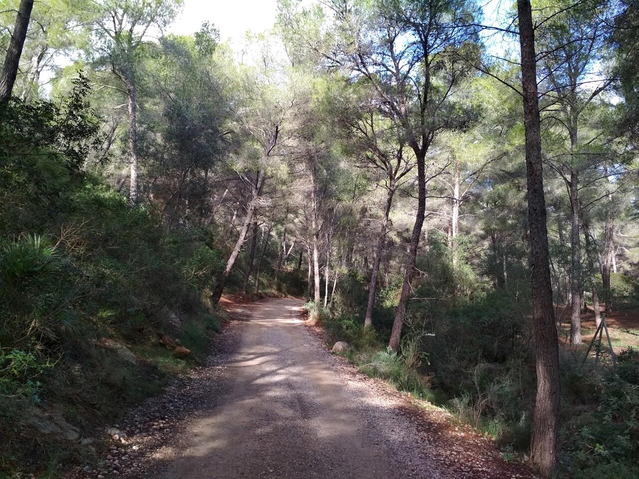 Ruta de Sant Elm a Torre de Can en Basset