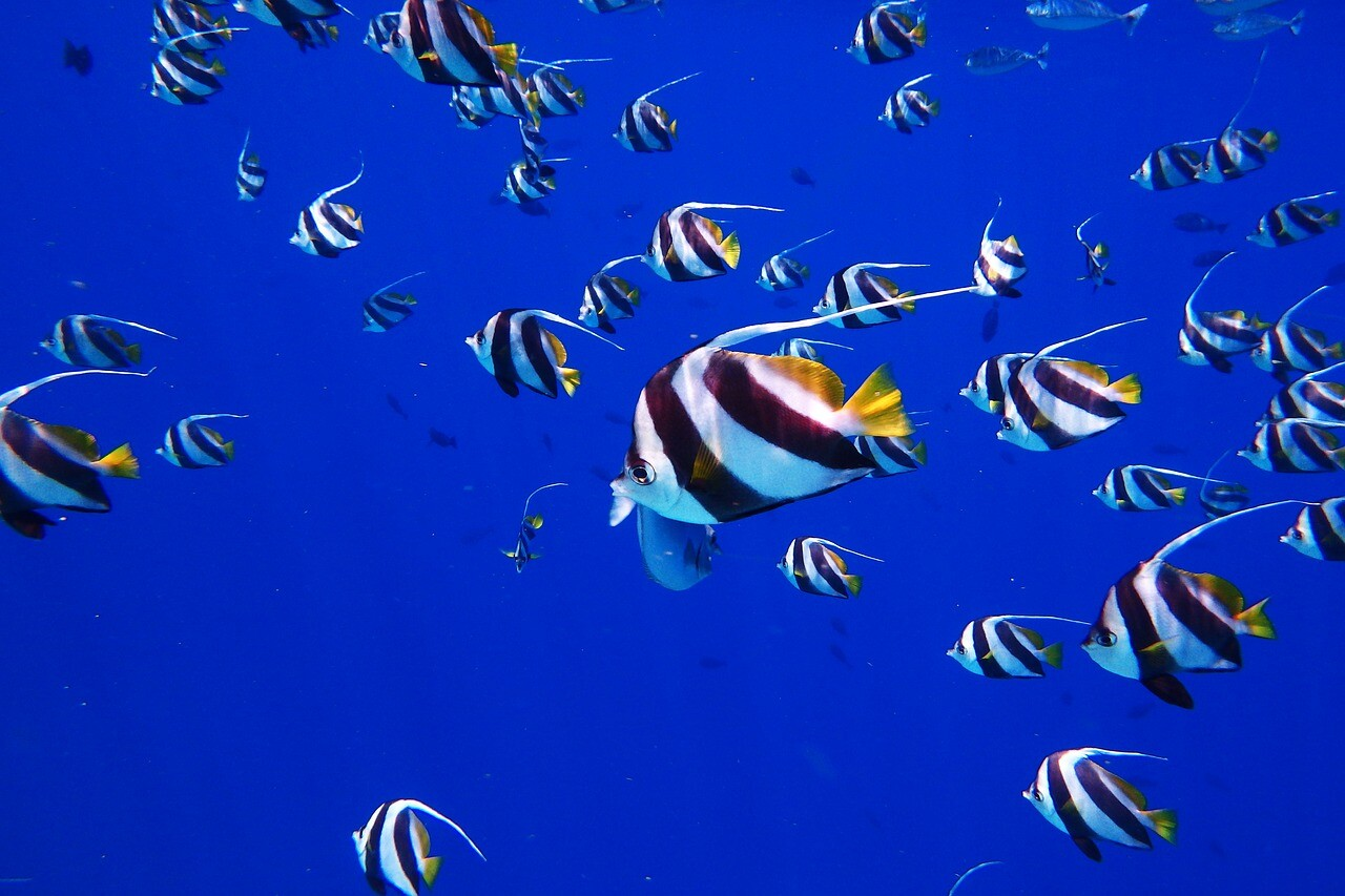 esnorquel Caribe