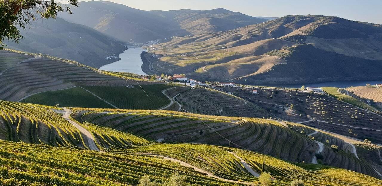 viñedos de la región del duero portugal
